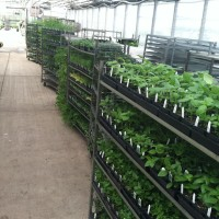 The Herb Society of Nashville Annual Herb Sale