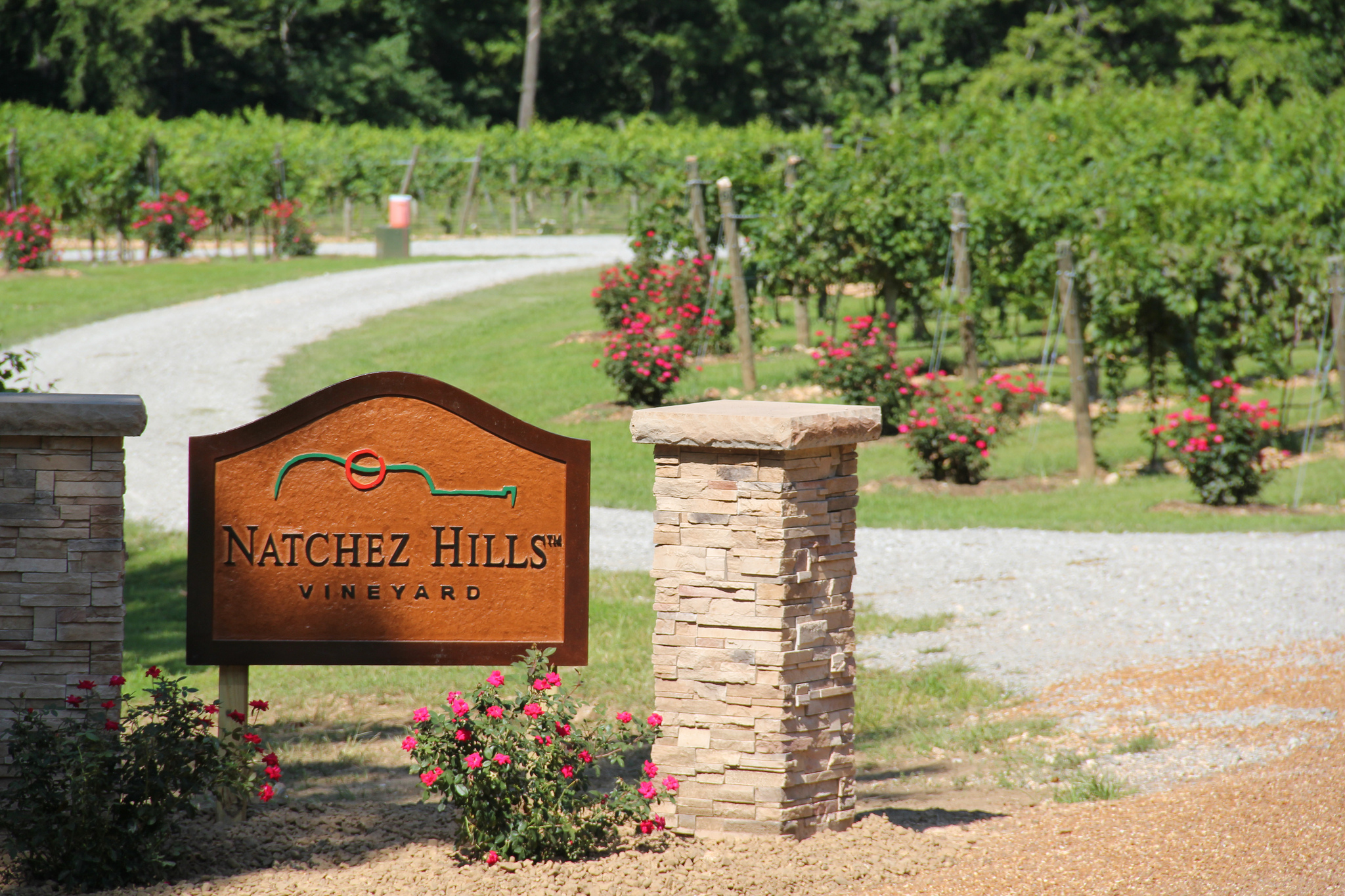 Primary painting with a twist at natchez hills vineyard for Painting with a twist macon ga