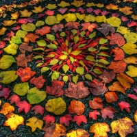 primary-Nature-Installations-in-Sevier-Park-1474397563