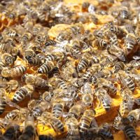 ASC Permanent Exhibit | Beekeeping