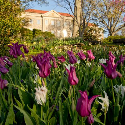 Cheekwood in Bloom