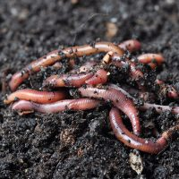 Knee-High Naturalist: Wiggly Worms