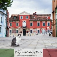 Dogs and Cats of Italy