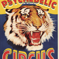 Ted Drozdowski's Psychedelic Circus