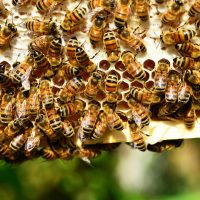 Advanced Beekeeping Winter Workshop