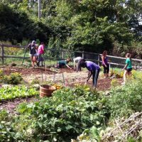 Environmental Impacts of Urban Agriculture