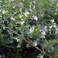 Invasive Plants in Riparian Zones | Identification and Control Considerations