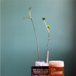 Arbor Day with Frothy Monkey + MadTree Brewing
