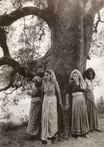 Seeing the forest for the trees: Kiran Chandra