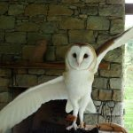 Owl Day - All Ages