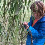 Family Friday: Andy Goldsworthy Inspired Installations in the Park with Nashville Tinkergarten