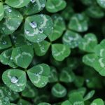 CANCELLED The Magic of Luck: A New Kind of St. Patrick's Day Celebration + Yoga