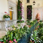 Orchids in the Mansion