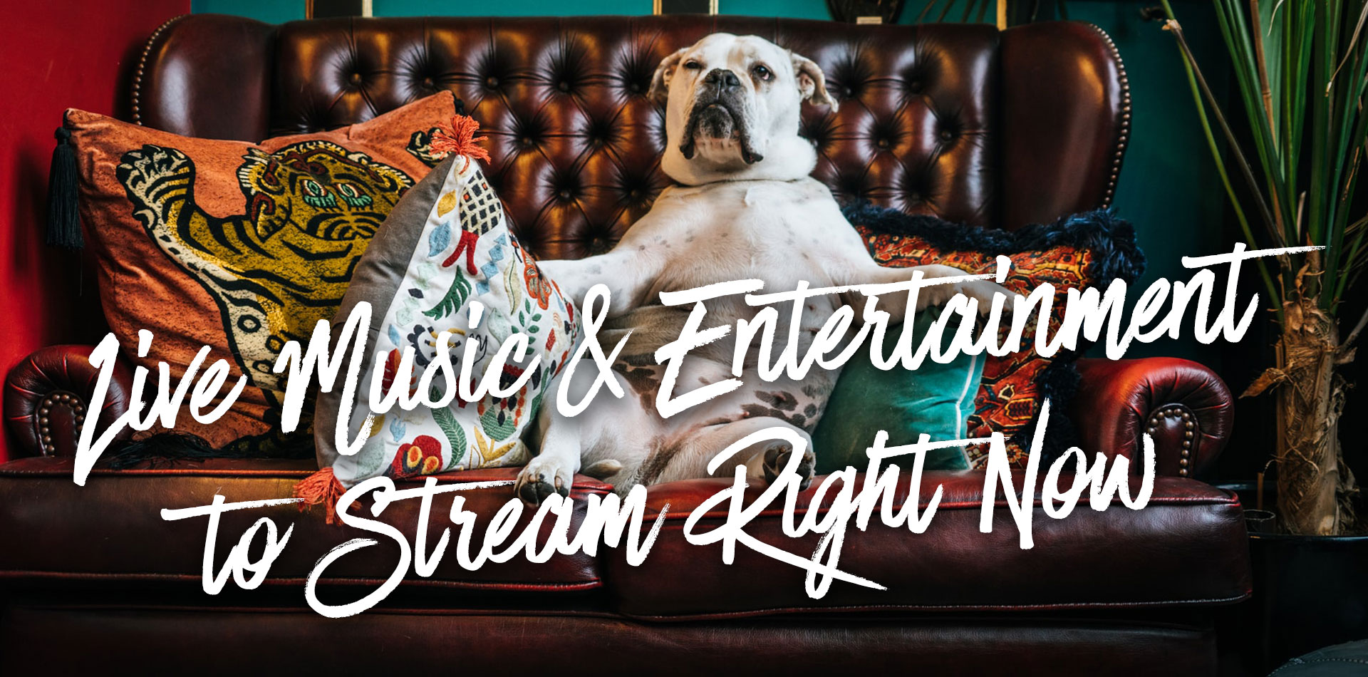 Live Music & Entertainment to Stream Right Now