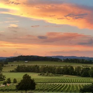 Visit Arrington Vineyards