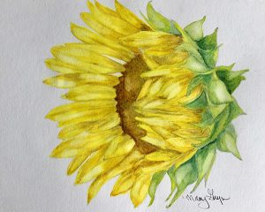 Botanical Watercolors for Beginners: Sunflowers