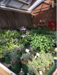 Perennial Plant Society Online Plant Sale