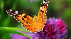 Alive's Memorial Butterfly Release at Home - Nashville