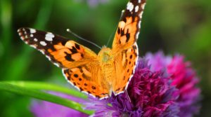 Alive's Memorial Butterfly Release at Home - Mur...